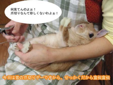 02_20120203170003.jpg