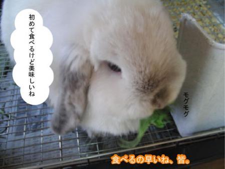 03_20120228170853.jpg