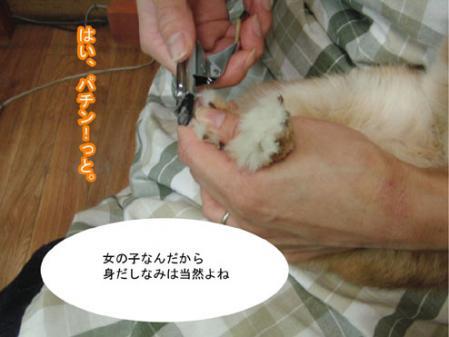 04_20120203170002.jpg