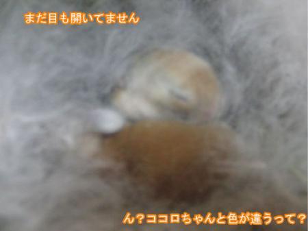 04_20120217163753.jpg