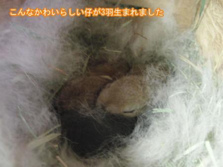 04_20120306172147.jpg