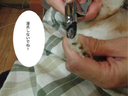 05_20120203170002.jpg