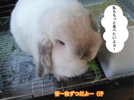 06_20120228170852.jpg