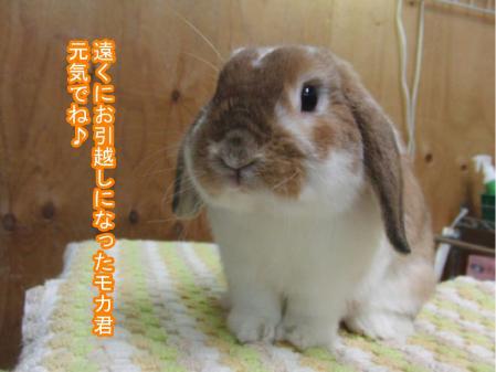 06_20120323172046.jpg