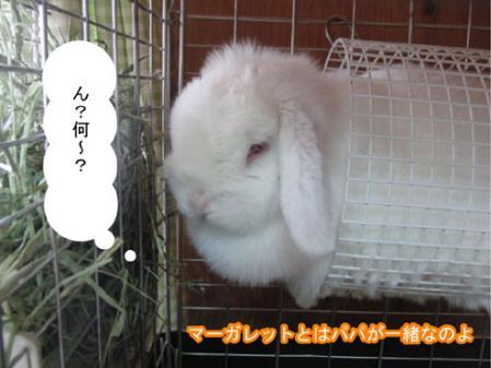 09_20120131170111.jpg
