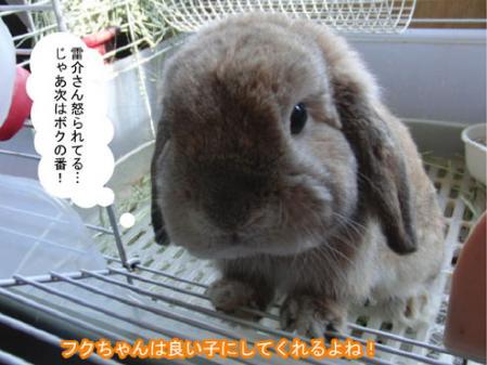 09_20120214154226.jpg