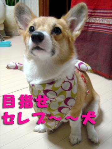 モデル犬ミクさん