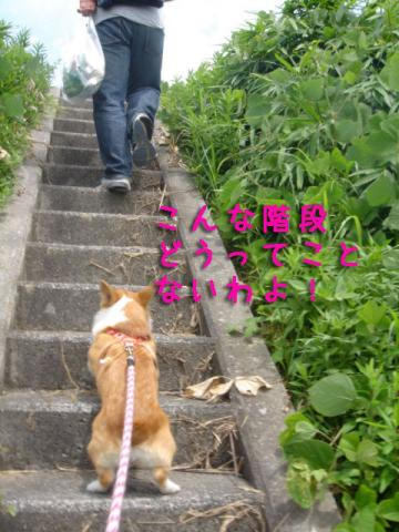 階段駆け上がるミクさん