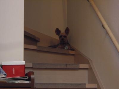 階段からもカ