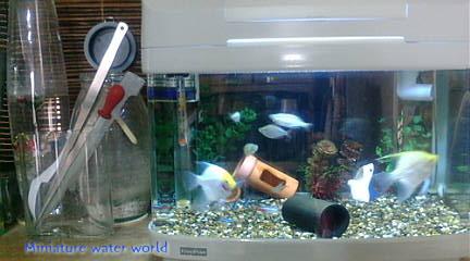 本水槽カルディアアクロス冷却ファン~猛暑回避水温対策~①