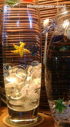 ボトルアクアリウム④