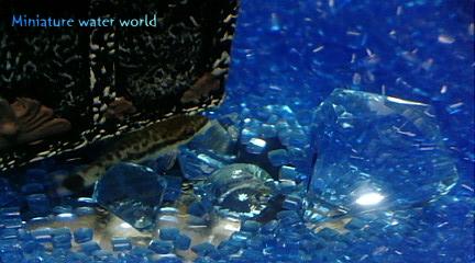 海底の宝石②
