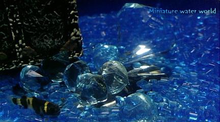 海底の宝石⑥