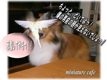 inuac_20081027093428.jpg