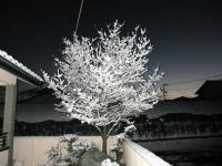 2012.1.19 我が家の雪の花1