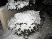 2012.1.19 我が家の雪の花2