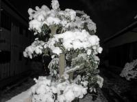 2012.1.19 我が家の雪の花3