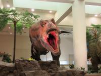 2012.3.24 総合科学博物館 ティラノザウルス2
