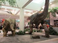 2012.3.24 総合科学博物館 ティラノザウルスとトリケラトプスを後ろから