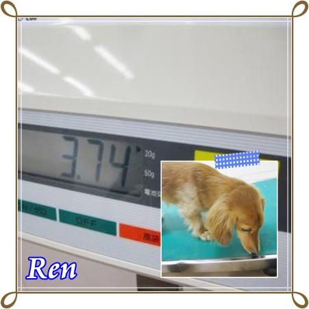 ~レン~体重~