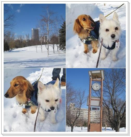 中島公園~レンラン~冬