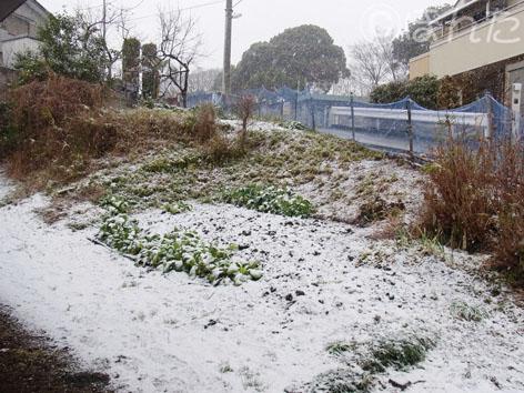 雪_2011