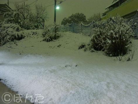 2011雪_1