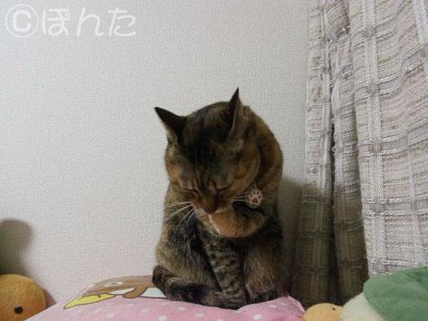 うに_猫の日5