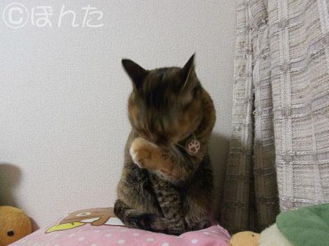 うに_猫の日4