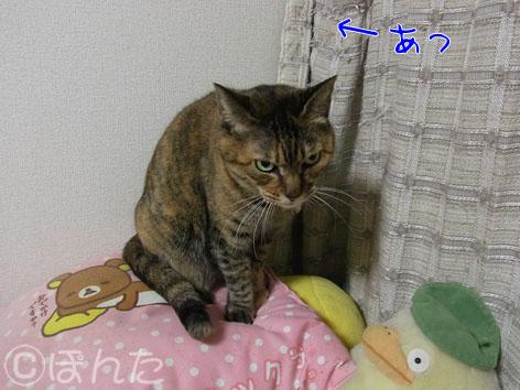 うに_猫の日2