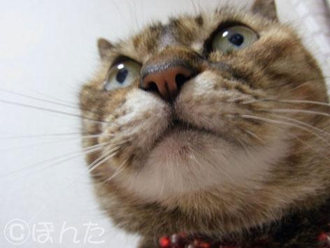 うに_猫の日8