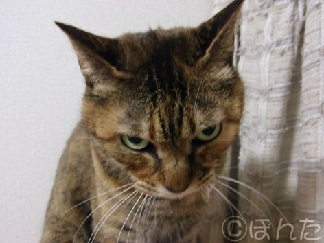 うに_猫の日10