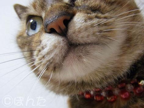 うに_猫の日9
