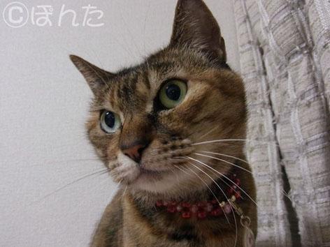 うに_猫の日7