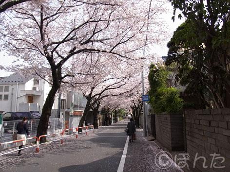 2011_桜1