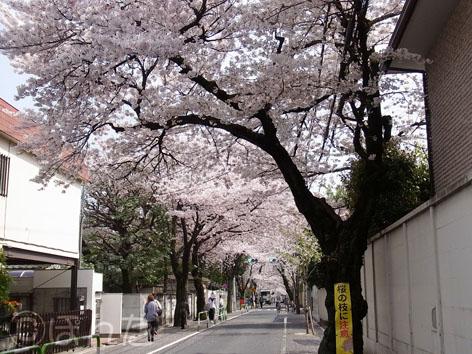 2011_桜2