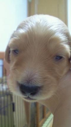 2008年10月12日オレンジちゃん