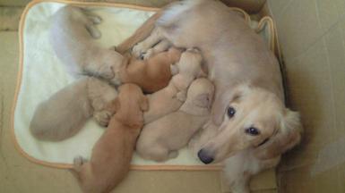 2008年10月16日授乳