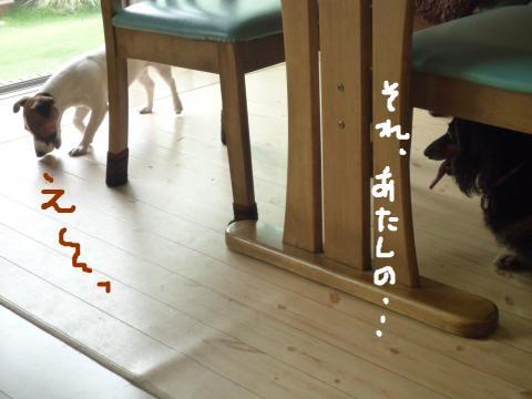 snap_mireiushiwakamairo_20096013753.jpg