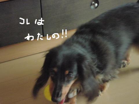 snap_mireiushiwakamairo_2009601547.jpg