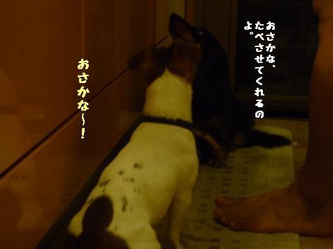 snap_mireiushiwakamairo_20096035554.jpg