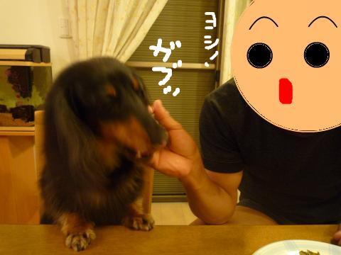 snap_mireiushiwakamairo_20096043029.jpg
