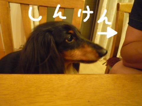 snap_mireiushiwakamairo_2009604377.jpg