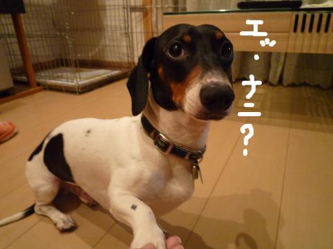 snap_mireiushiwakamairo_20096105533.jpg