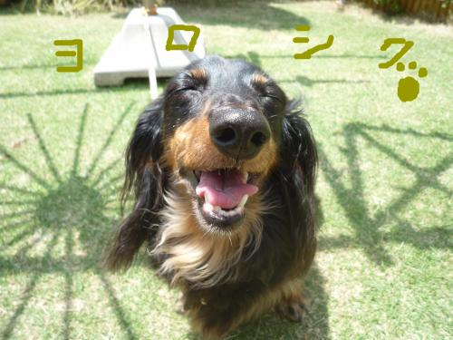 snap_mireiushiwakamairo_200961152418.jpg