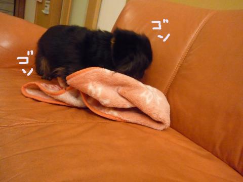snap_mireiushiwakamairo_2009612012.jpg