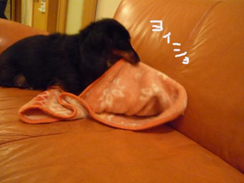 snap_mireiushiwakamairo_200961260.jpg