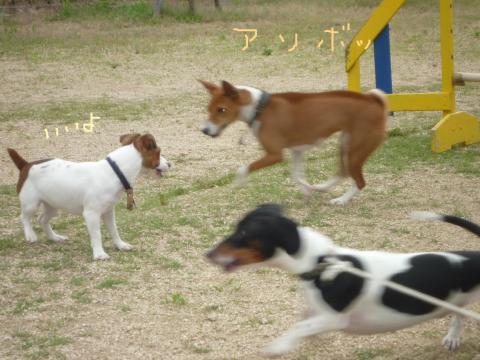 snap_mireiushiwakamairo_200962132655.jpg