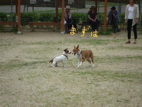 snap_mireiushiwakamairo_200962133517.jpg