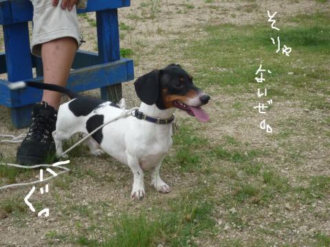 snap_mireiushiwakamairo_200962144615.jpg